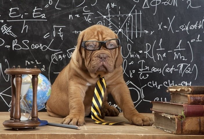 Smart dog with glasses in front of chalkboard with physics equations