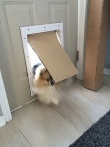 Pomeranian using pet door
